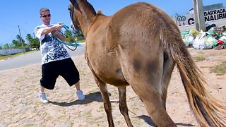 Donkeys & Mexican Nymphs